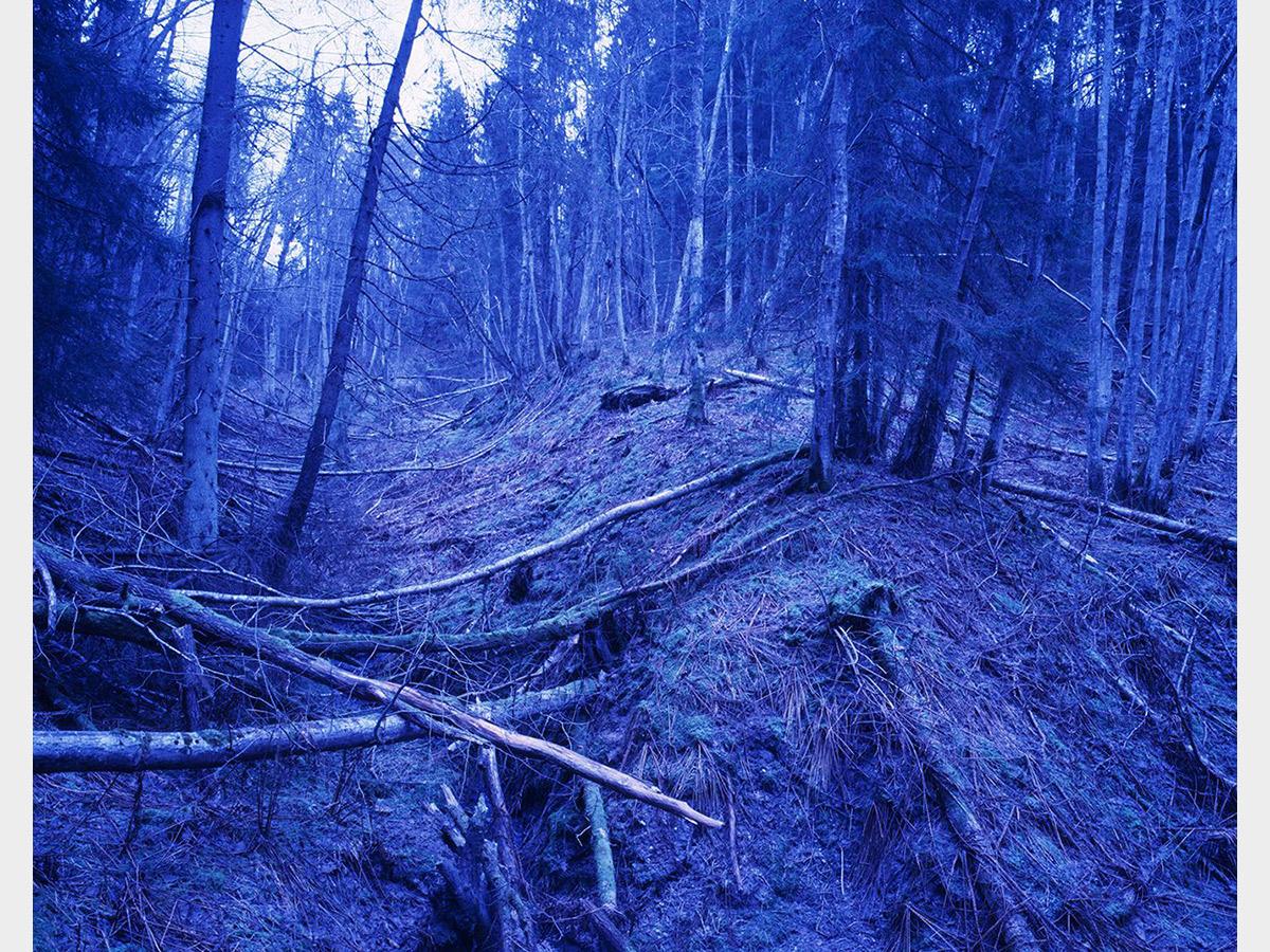 Morten Andersen, Blue Forest, self published, 2009