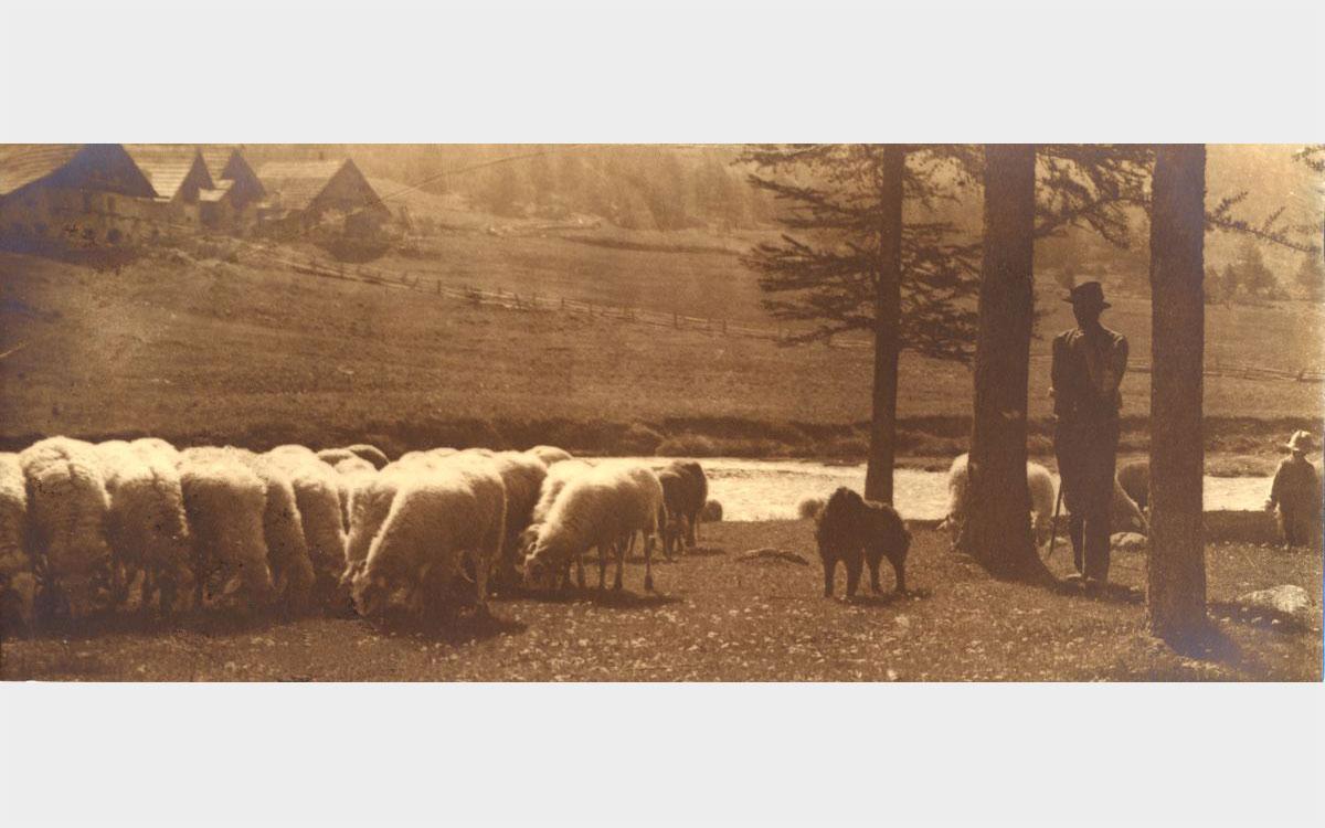Domenico Riccardo Peretti Griva, Pastore con pecore, ca. 1928