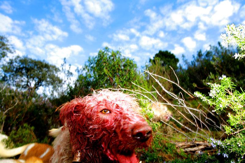 Untitled (Dog), Spain 2008 © Ricardo Cases