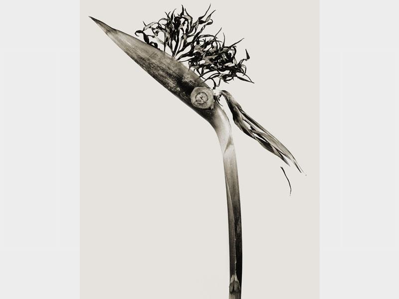 Herbarium: Giliandria escoliforcia, 1984