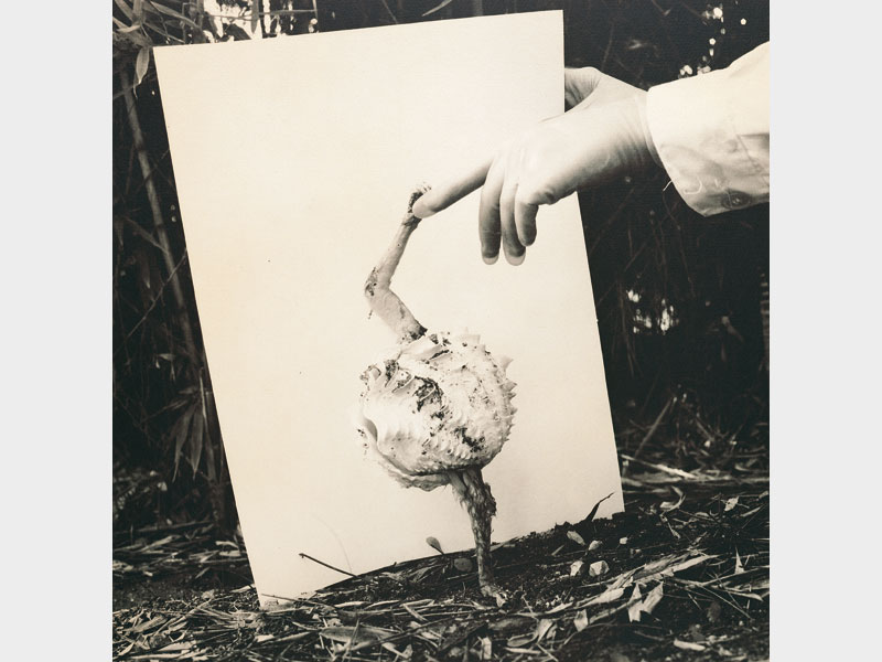 Fauna: Micostrium vulgaris, senza data. Photo by Hans von Kubert