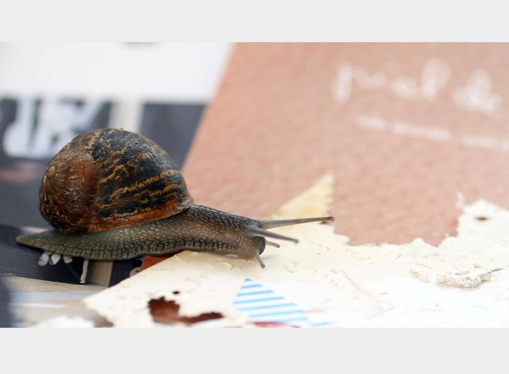 Gastropoda, video still. 2013  © Joan Fontcuberta