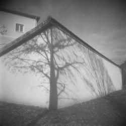 Candido Baldacchino, Albero di Mezzana, 2013. Stampa digitale su carta di cotone, 60 x 60 cm. Courtesy Galleria Blanchaert
